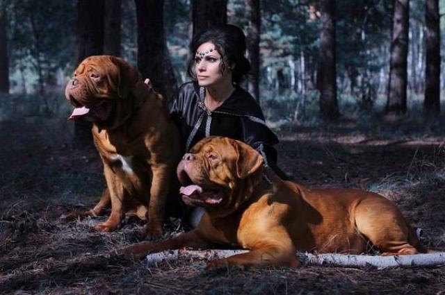 Собак в семье может быть несколько!