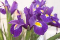 12 мая: народный календарь, именинники, праздники, интересные факты