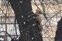 Бельчат находят в парках и скверах города.