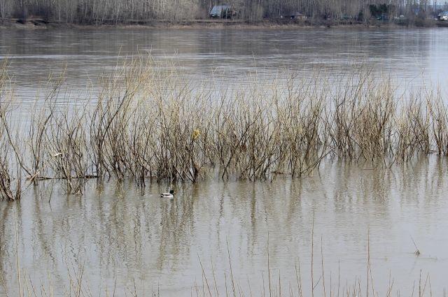 Кузбассовец застрял в реке, пытаясь встретиться с возлюбленной.