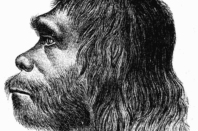 Ученые работают над «воскрешением» мозга неандертальцев