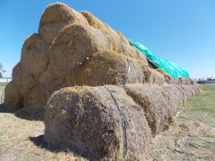 Высокие надои зависят от трех К - корма, коров и кадров.