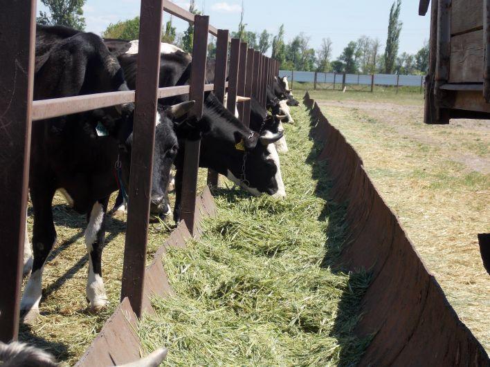 Открыть такое предприятие удалось благодаря федеральной программе развития семейных животноводческих ферм.