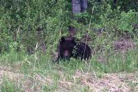 Медведь встретился в лесу мужчине в Советском районе