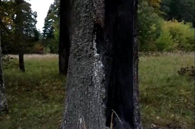 Парня обнаружили под деревом.