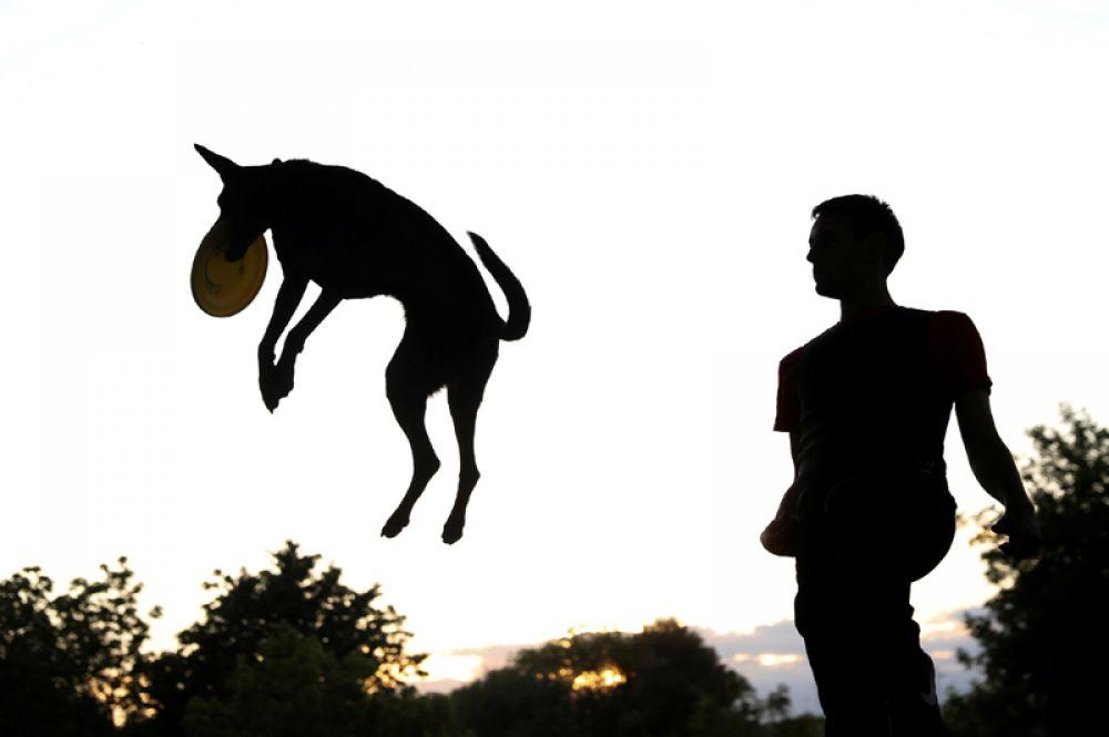 Хозяин и его собака играют во фрисби в парке Мадрида, Испания.