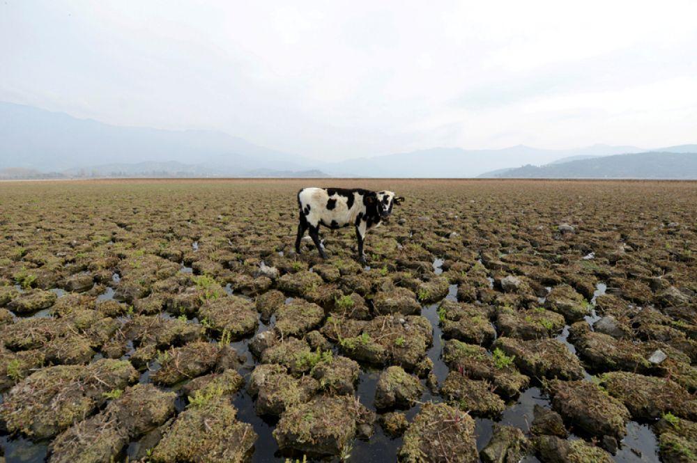 Пересохшая лагуна Акулео, Чили.