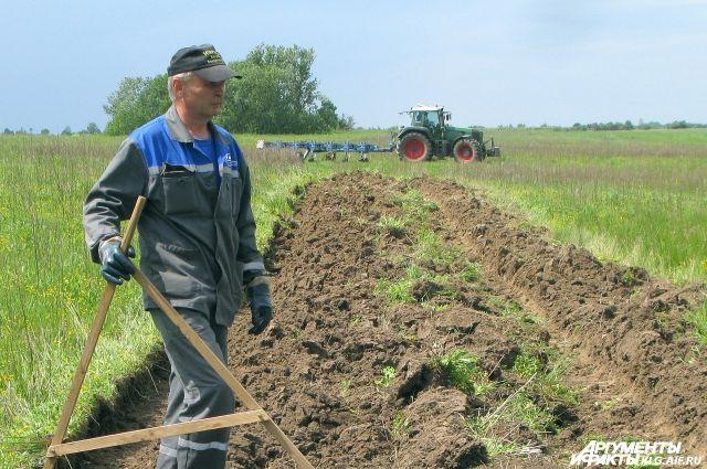 В Калининградской области посевные площади за 4 года увеличились на 40%.