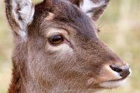 Подозреваемого браконьера задержали