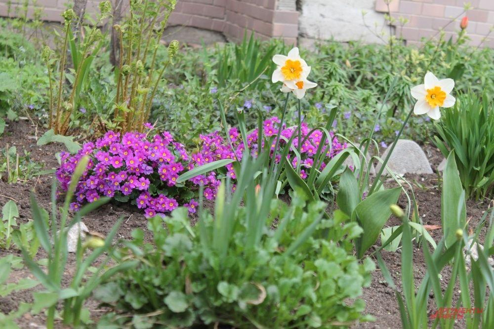 Жители многоквартирных домов сами высаживают цветы
