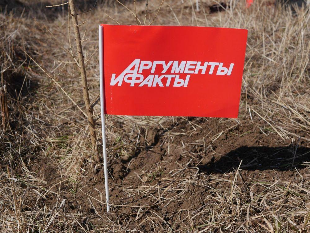 40 саженцев сибирской лиственницы высажено в честь юбилея АиФ