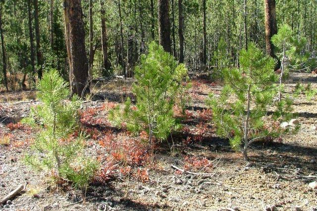 Тюменцы под музыку высаживали лес