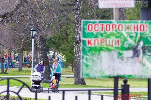 Петербург попал всписок лидеров почислу укусов клещей