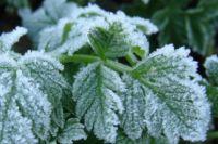 Похолодание может продлиться до начала июня.