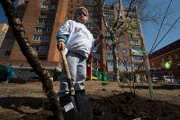 В сквере опять растут деревья, посаженные местными жителями.