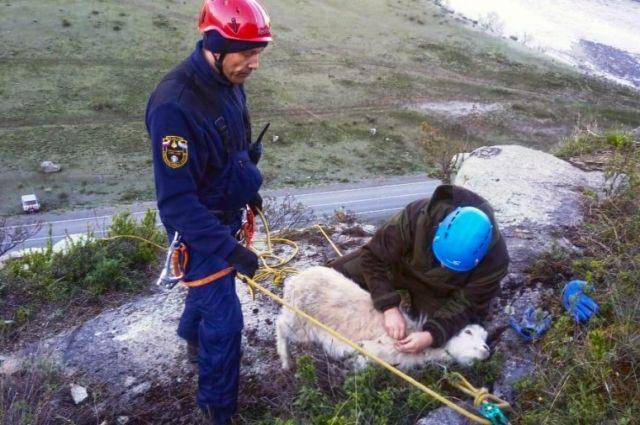 В спасательной операции участвовали пять человек от МЧС