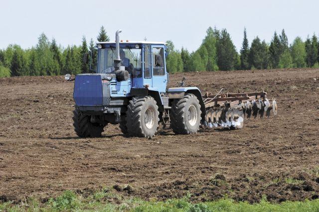 В Прикамье хорошо растут бобовые и злаковые травы.