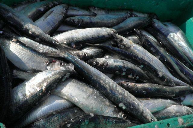 Калининград вошел в ТОП-5 российских городов с самой вкусной рыбой.