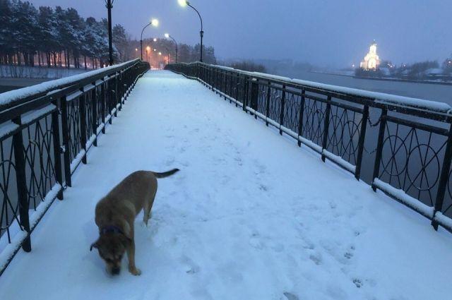 Майский снег в Сургуте