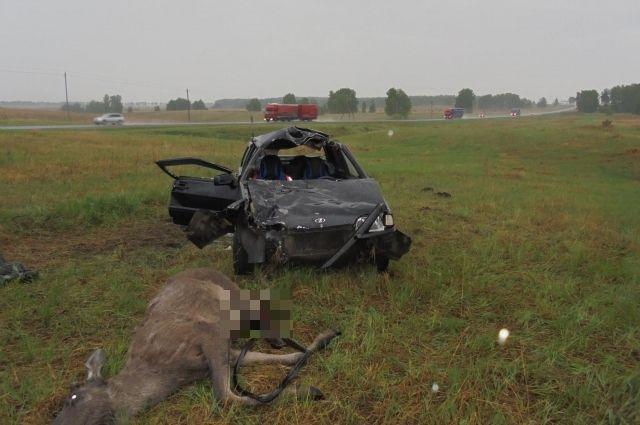 Смертельное ДТП в Северном районе - «ВАЗ-21154» сбил лося.