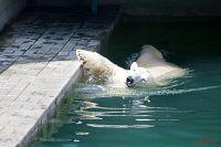 В новосибирском зоопарке отметили День медведя.
