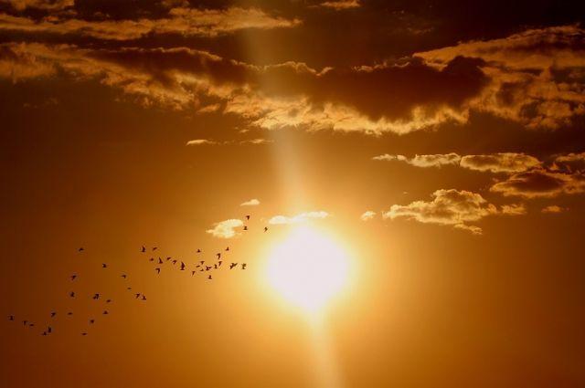 Лето, солнце и жара