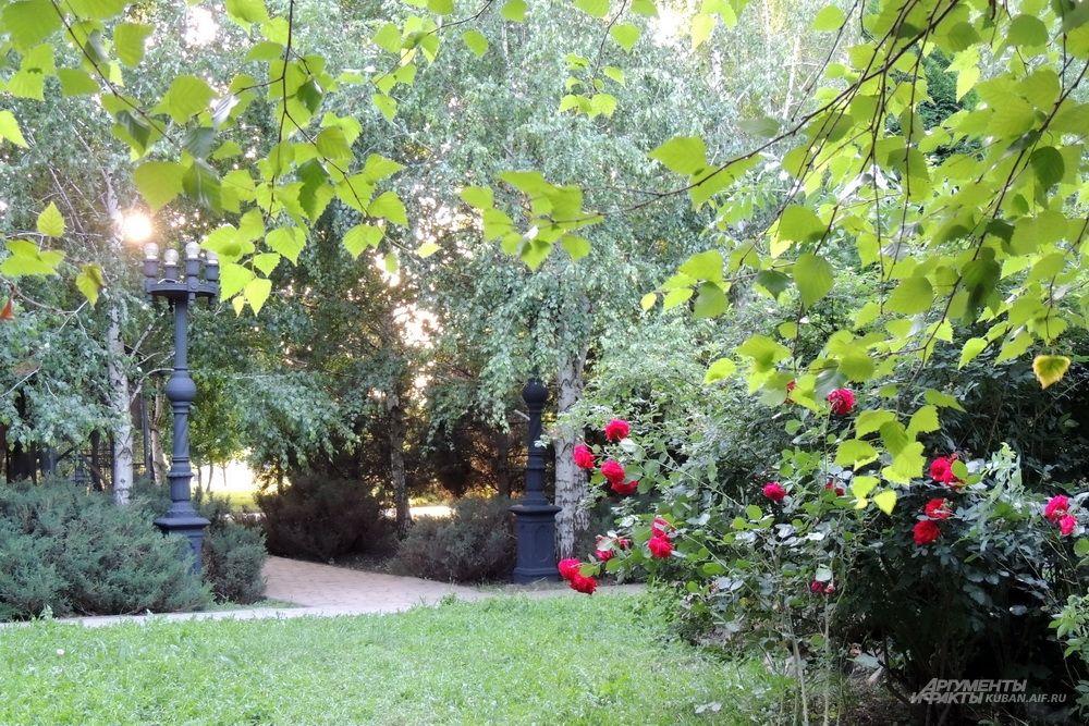 Клумба с розами.