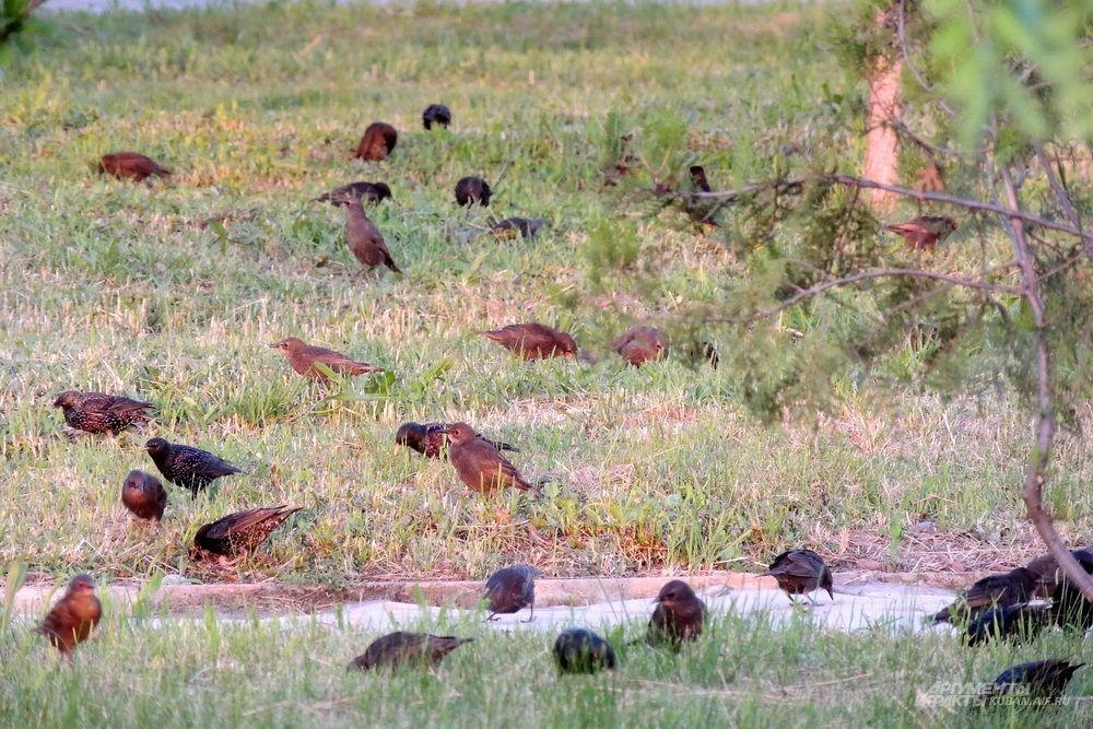 Птицы в парке.