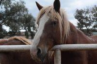Коня вернули хозяину.