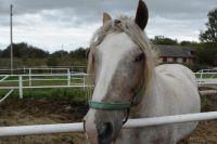 В Светлинском районе пенсионера ударила копытом лошадь.