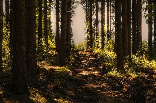 Пожарная обстановка в лесах Ямала спокойная