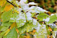 В некоторых районах края снег выпал ночью, в некоторых - утром.