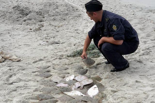 В Балтийском море за добычу ценной камбалы задержали рыбака-браконьера.