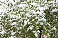 Несмотря на прогнозы синоптиков, снег для многих жителей стал неожиданностью.