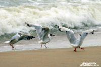МЧС предупредило об опасных течениях на Балтийском море.