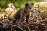 Мать нашла медвежонка после того, как спасатели доставили его в лес.