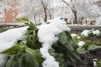 Лето в Сибири - холодное и малоснежное