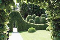 Живая изгородь будет состоять из кизильника блестящего.