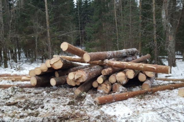 Лес осужденные валили с февраля по апрель.