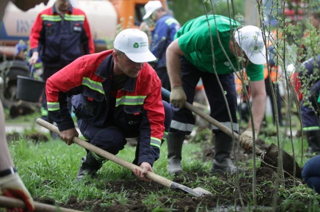 3 тыс. деревьев за три года высадила «Зелёная дружина».