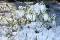 Даже югорчан удивил снегопад в начале июня