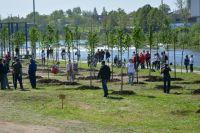 В 2012 году учащиеся лесного техникума решили облагородить пустырь около своего образовательного учреждения.