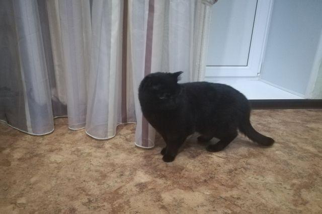 Сейчас кошке срочно ищут постоянный дом