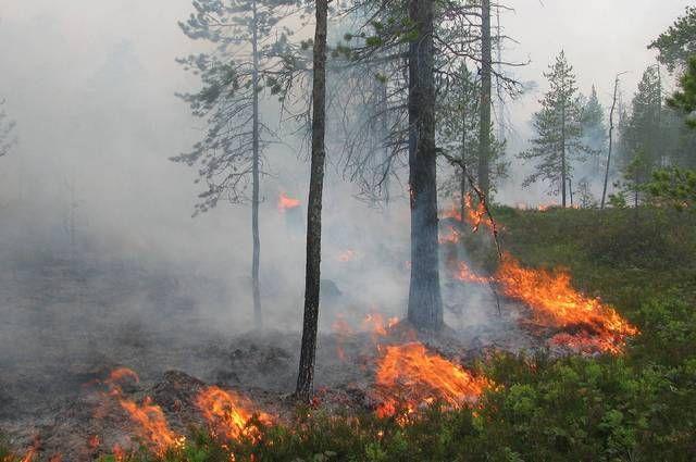 Пока что в Ханты-Мансийском округе зафиксировано 12 лесных пожаров.