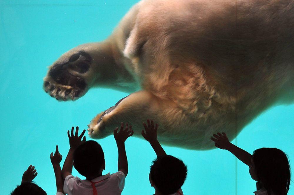 В Сингапурском зоопарке содержатся 315 видов животных, из которых около 16 % находятся под угрозой исчезновения. С самого начала своей работы Сингапурский зоопарк следовал современной тенденции — представлять животных в естественной среде обитания, с открытыми вольерами, рвами и стеклянными заграждениями между животными и посетителями.