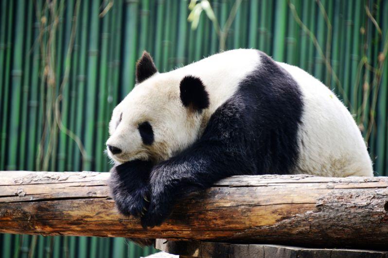 Подобно многим китайским паркам, территория Пекинского зоопарка имеет вид классических китайских садов. Здесь сочетаются искусственные насаждения цветов и заросли естественных растений, густые рощицы деревьев, участки лугов, пруды с лотосами и небольшие холмы с павильонами и вольерами. Одним из самых посещаемых животных этого зоопарка является Большая панда.