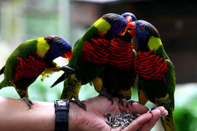 В Куала-лумпурском парке птиц собрано более 2000 пернатых. Основным отличием этого парка является концепция «свободного полета», то есть большинство птиц находятся вне клеток и вольеров. Посетители имеют возможность близко познакомиться с жизнью более чем 800 птиц 60 видов, живущих вместе в почти естественной среде.