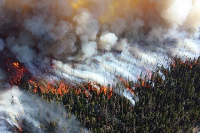 Первый лесной пожар случился в Пуровском районе