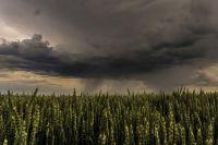 В Новосибирской области ожидаются дожди, местами сильные
