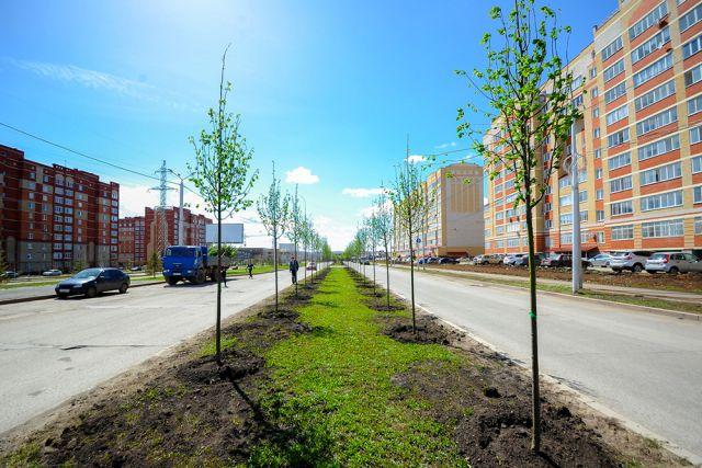 Новая кленовая аллея появилась на главной улице Альметьевска.